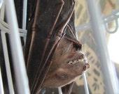 My Pet Bat in White Metal Cage - SHIP FREE 2