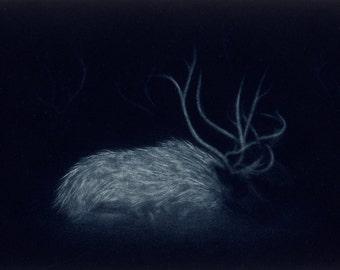 Sleeping Reindeer - original mezzotint
