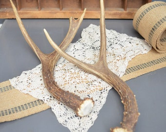 Pair of Deer Antlers Farmhouse Decor Point Nature Rustic Large Display Cabin Collection Man Cave Rack Small