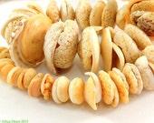 Conus Shell Beads Matched Mauritanian Graduated Africa 99845