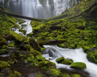 Mossy Delight (Proxy Falls, Oregon)