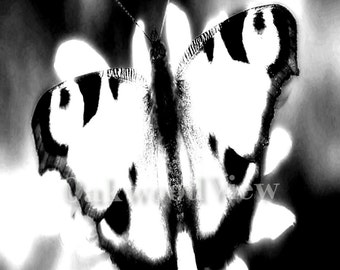 Black & White Butterfly Print, Surreal Giclee Art, New 4x6 BW Print in 5x7 Mat, Nature Wildlife, FREE SHIPPING