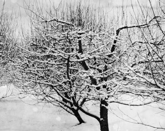 Snow Covered Trees Photograph, black and white Snow Landscape Print, Snow, branches, winter black and white scene 8x8 and up