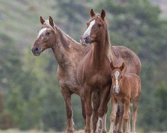 Bronze Warrior's Family -  Fine Art Wild Horse Photograph - Wild Horse - Adobe Town - Adobe Appys