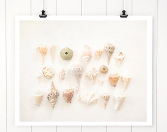 sea shells, neutral sea shell print, beach decor coastal, beach house art, fine art, seashells, beach cottage decor, seaside shore house