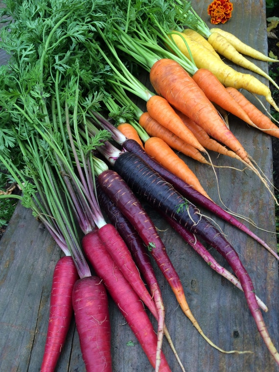 FREE SHIPPING Rainbow Carrot Heirloom Seeds Organically Grown Exclusive Custom Mix Best Seller Free Ship Coupon on Homepage  (USA residents)