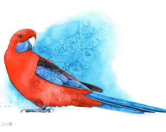 Crimson Rosella print, A3 size, CR13216, Crimson Rosella watercolour painting, rosella watercolor print, parrot watercolor
