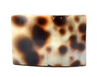 Tiger Cowry Shell Cabochon Stone (25mm x 17mm x 7mm) - Rectangle Cabochon - Natural Shell - Tiger Cowrie Shell
