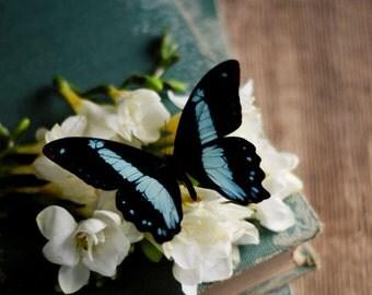butterfly wall art, book art print, floral nursery art, rustic flower art, farmhouse decor, blue and black decor, rustic office decor