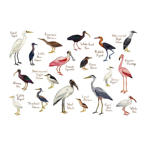Name Any Two Wading Birds