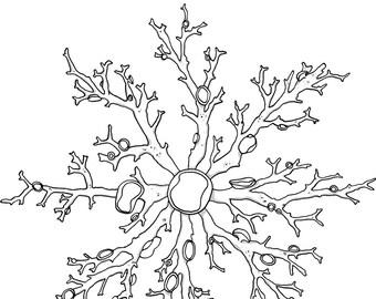 Brain Cell Sticker Sets Cartoon Neuroscience Sciart