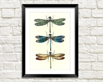 DRAGONFLIES ART PRINT: Vintage Dragonfly Illustration Wall Hanging (A4 / A3 Size)
