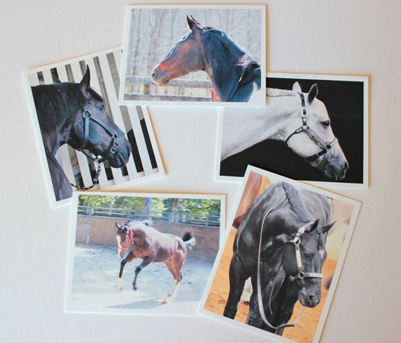Equine photos Horse Photos Fine Art, box of 10 w/envelopes, Blank Greeting Cards, photo greeting cards, horse art, note cards,