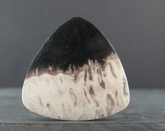 Rare Palm root fossil cabochon,  Natural cabochon Jewelry making Supplies S6825