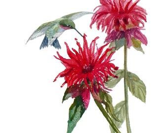 Hummingbird print, bird wall art, red bee balm flower artwork by Janet Zeh  Original Art