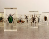 Vintage Beetles/Bugs/Spiders....Listing is for ONE....Paper Weight....Taxidermy...Man Cave...Gift Idea.