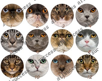 10mm,12mm,14mm,16mm,18mm,20mm,25mm,30mm Cat Round photo Glass Cabochons,jewelry Cabochons finding beads,Photo Glass Cabochons