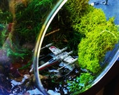 Mini Dagobah System - MADE TO ORDER - Hanging Glass Globe