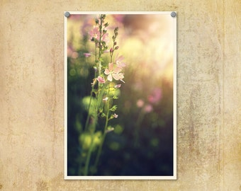 Nature Photography | Flowers | Floral Photo | Wildflowers | Pink Flowers | Shabby Chic | Soft Colors | Oregon | Pink Floral Print