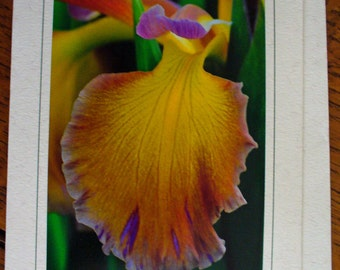 Flowers Garden Spring Cheerful, Eco Friendly, Birthday Card, All Occasion, Blank Greeting Card, Photo Card