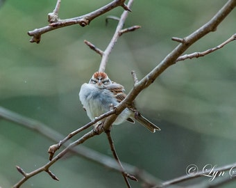 Grumpy Bird -  Nature photography, art, wildlife photography, animal, bird, wildlife, funny, spring, fine art print, North Carolina