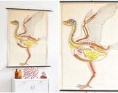 Vintage school poster, pull down chart, zoological school print, bird biology poster, print East German Berlin