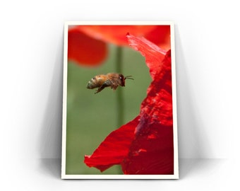 """Honeybee and Red Poppy Photograph - Red and Green Wall Art, Macro Home Decor, Nature, Botanical, Flower, Bee """"Into the Maw"""""""