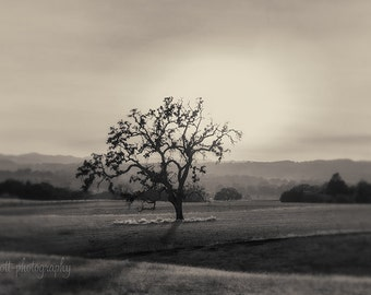 Templeton California Landscape | Black & White Print | Bare Tree Photograph | Sunset | Romantic Photography | Wine Country Art | Wall Decor