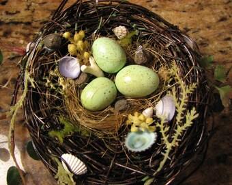 Coastal Spring Nest