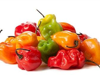 Killer Hot Pepper, Pepper Collection, 5 scary chilies, 50 rare seeds, Red Habanero, Congo Trinidad, Paper Lantern, Aribibi Gusano, gift wrap