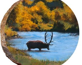 Elk in the Lake - DAE285
