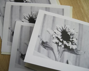 Sunflower -- Blank Note Card (#NCC024)
