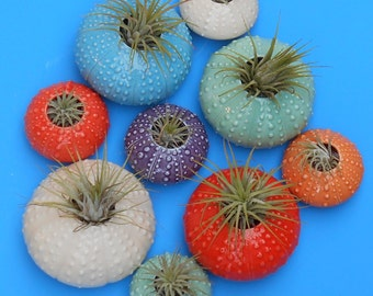Vertical Wall Planters, Small ,Urchin, Air Planters, Succulents