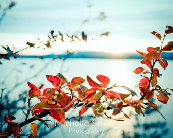 Landscape Photography, Autumn Photography, Winter Prints, Blue and Orange, Nature Photography, Nature Wall Art, Autumn Colors, Seasons