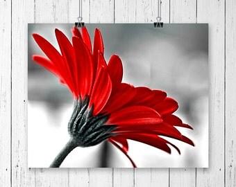 Flower Photography Nature Prints Daisy Floral Print Gerbera Daisy Fine Art Photography Red Wall Art Nursery Decor Botanical Prints Red Grey