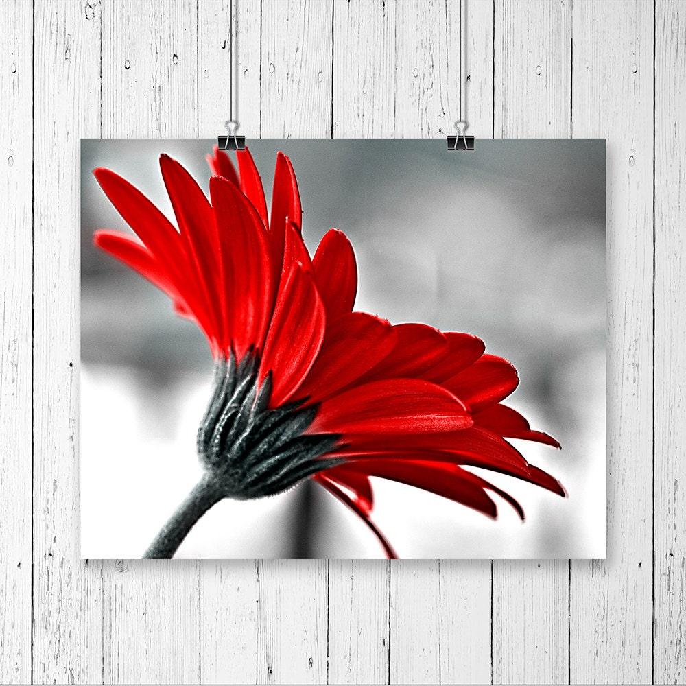Wall Art Red Flower : Red wall art daisy print gerbera flower macro