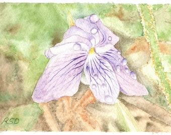 Long-Spurred Violet - 5x7 Watercolor Print