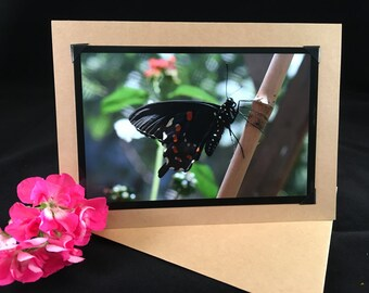 Pipevine Swallowtail Butterfly 5x7 greeting card - note card