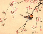 Bird and Flower japanese art, Red Avadavat and Cherry FINE ART PRINT, Japanese birds flowers art prints, posters, paintings, woodblock