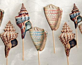 Seashell Cupcake Picks - Sea Shell Nautical Tropical Cupcake Toppers Vintage Under the Sea Topper Mermaid Ocean Topper Food Picks - Wedding
