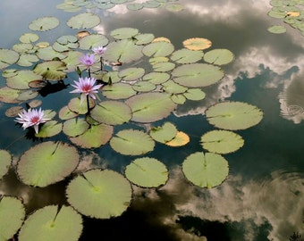 Nature Photograph - Reflection on Water Lily Pond - Wall Decor - Garden - Botanic Art - Water Lily - Cloud - Lily Pad - Flower Photograph