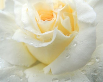 Rose Photograph - White  Rose - Elegant Flower - Raindrop - Flower wall Decor - Floral Art - Nature Photograph - Flower Photography