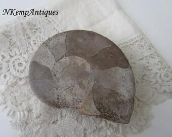 Decorative fossil item
