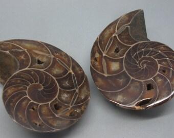 Ammonite Fossil Pair | Madagascar