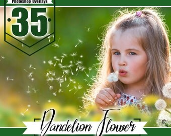 35 dandelion flower photo overlays, photoshop overlay, photo overlays, summer wedding baby photo, photoshop templates,PNG files