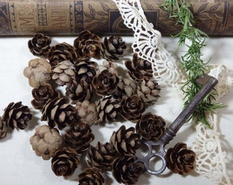Mini Pine Cones. (natural craft fall winter tree forest boho hippie pagan country christmas ornament found object tiny small cute)