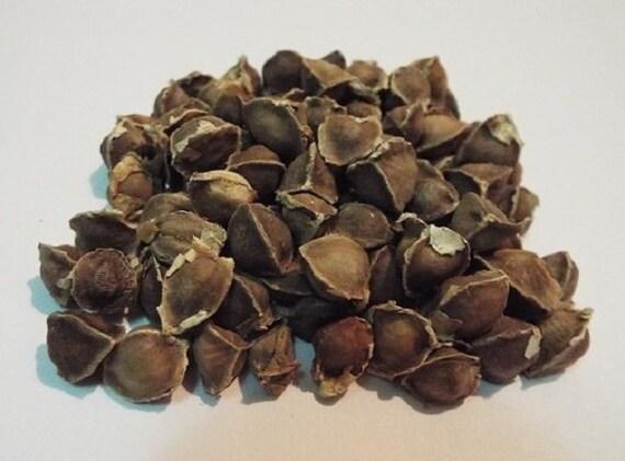 how to prepare moringa seeds