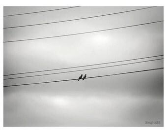 Bird Photography, Bird Photos, Abstract Bird Beach photos, Bird Photography, Birds on a wire Prints, Bird Print, Two birds image