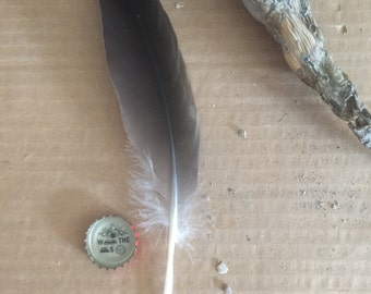 Single Feather from Desert