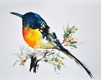 ORIGINAL Watercolor Painting, Blue Yellow Colored Sunbird 6x8 inch, Colorful Bird Art